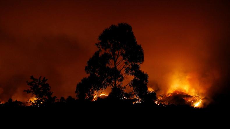 Portugal: Heftige Waldbrände fordern Dutzende Tote - FOTOS & VIDEOS