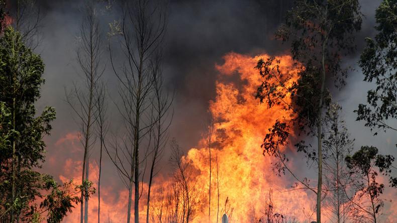 Dutzende Menschen fallen Waldbränden in Portugal zum Opfer