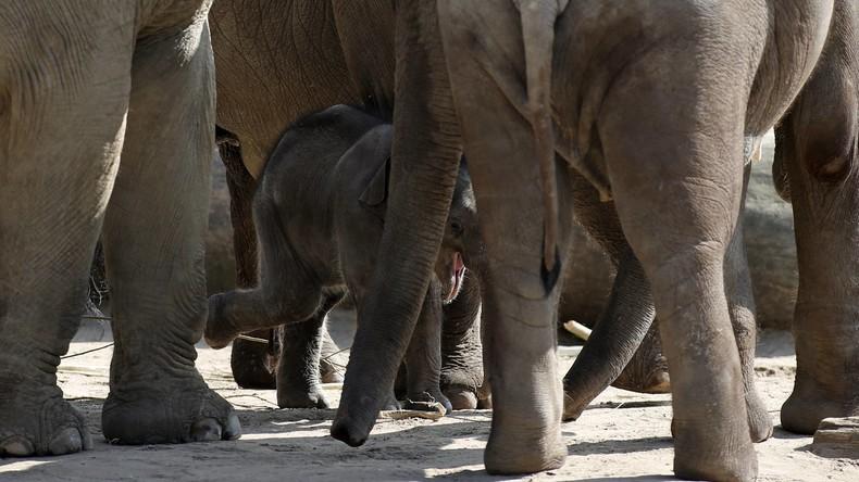 Deutscher Zoo muss wenige Tage altes Elefantenbaby einschläfern