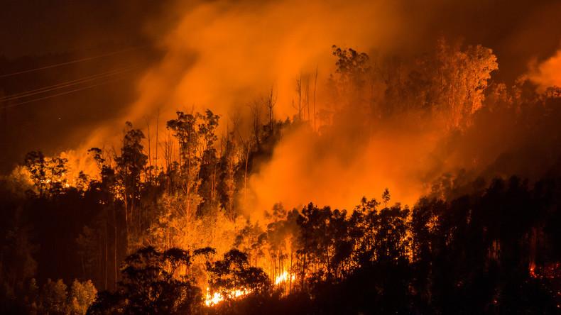 Lokale Medien: Löschflugzeug stürzt in Portugal ab
