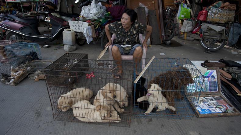 Hundefleisch-Festival in Südchina trotz Protesten gestartet