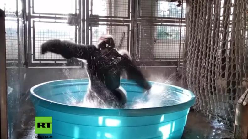 Ein Pool im Sommer ist was Feines – Breakdance-Gorilla erobert das Internet