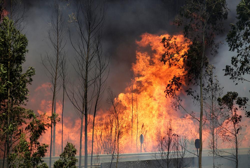 Bei einem großen Waldbrand in Zentral-Portugal, wurden mindestens 62 Menschen getötet und 59 weitere verletzt.
