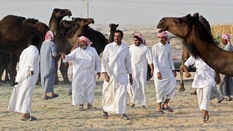 Aus Saudi-Arabien ausgewiesene katarische Kamele sammeln sich an der Grenze. Weil Katar zuwenig Fläche hat, durften die Tierbesitzer ihre Kamele bisher in Saudi-Arabien weiden lassen, Katar 20. Juni 2017.