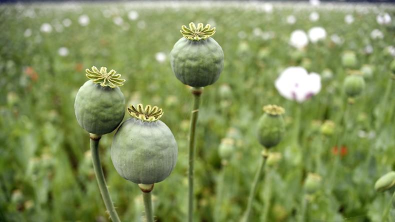 Afghanische Polizei findet Riesenladung Stoff für Heroinproduktion