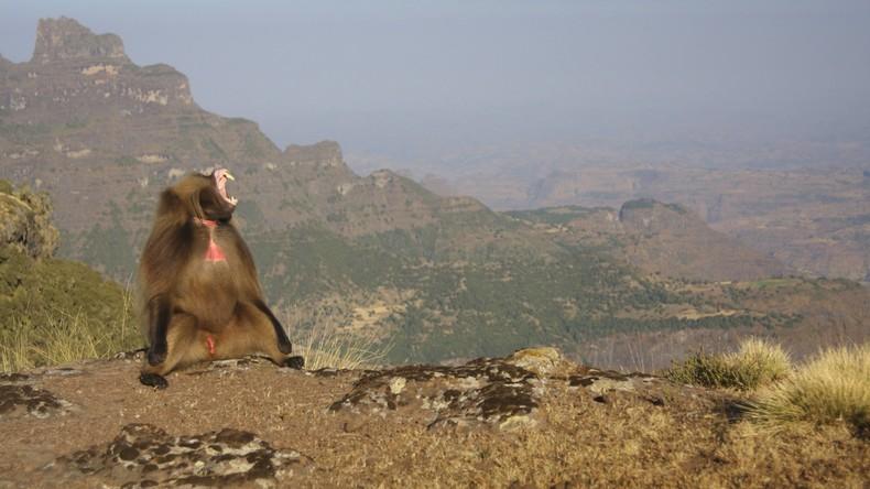 UNESCO nimmt Nationalpark Simien von Liste gefährdeten Welterbes