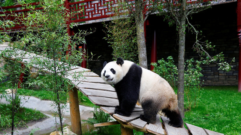 Live: Merkel und Xi Jinping bei gemeinsamen Festakt im Berliner Zoo für Panda-Pärchen Meng und Quing