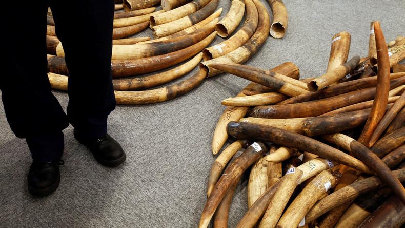 Vietnams Polizei beschlagnahmt knapp drei Tonnen Elfenbein