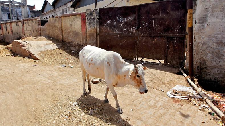 Indiens Oberstes Gericht setzt Verbot des Handels mit Rindern als Schlachtvieh aus