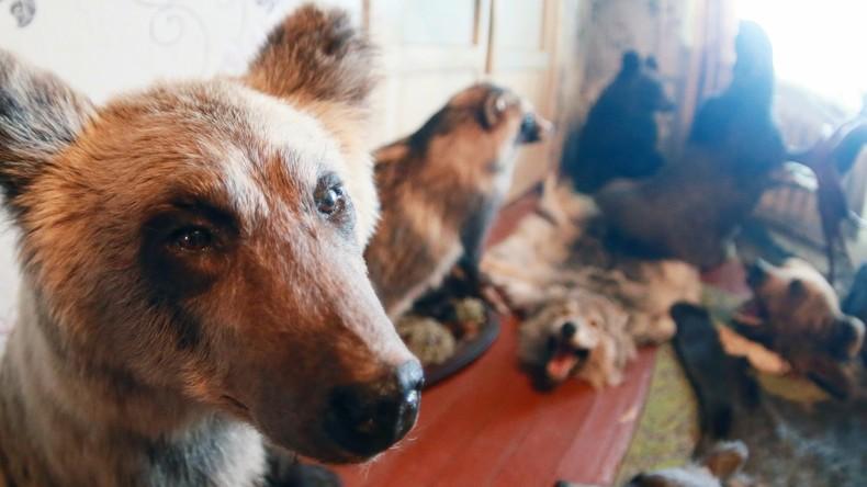 Arsenverseucht: Ausgestopfte Tiere verschwinden aus Schweizer Schulen