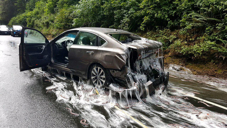Laster mit Schleimaalen umgekippt - Glitschiger US-Highway gesperrt [Video]