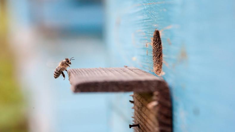 In New Yorker Wohnung fließt Honig die Wände herunter [Video]