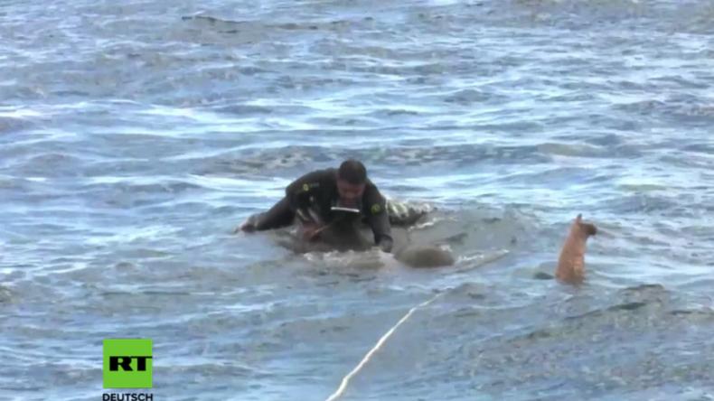 Sri Lanka: Nach 12 Stunden Überlebenskampf – Marine rettet Elefant auf offener See vor dem Ertrinken