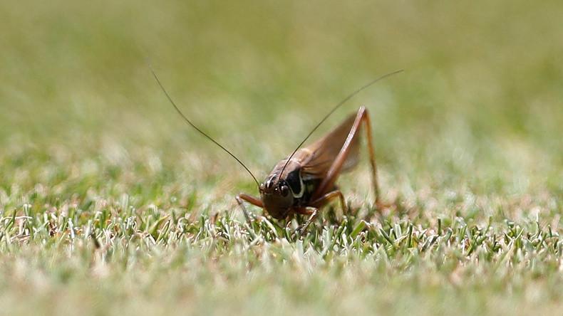 Umweltministerium warnt vor Insektensterben
