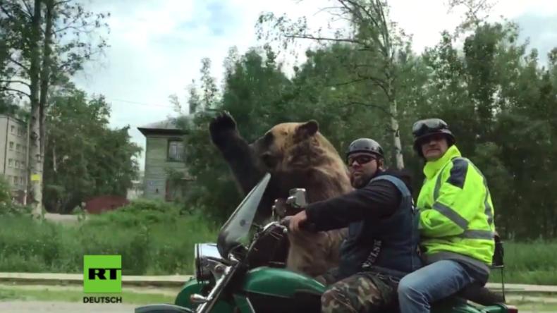 Verrückte Verkehrsvideos aus Russland - Bär fährt in Motorradgespann mit und grüßt Autofahrer