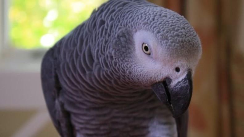 Papagei als Zeuge: US-Gericht fällt Urteil im Mordfall