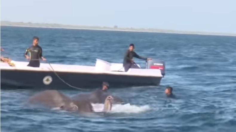 Sri-lankische Militärs retten zwei Elefanten aus dem Meer [VIDEO]