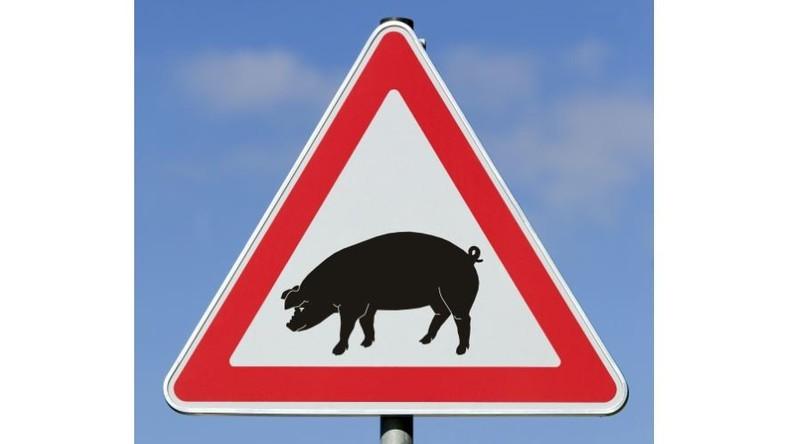 Tschechische Region ruft Krisenlage wegen Afrikanischer Schweinepest aus