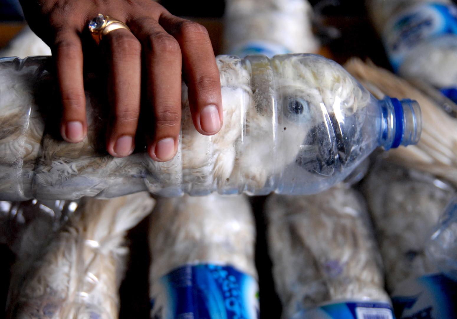 Eine Plastikflasche in der sich ein Gelbhaubenkakadu befindet. Diese seltenen Vögel wurden im Jahr 2015 im Hafen Tanjung Perak in Indonesien beschlagnahmt.