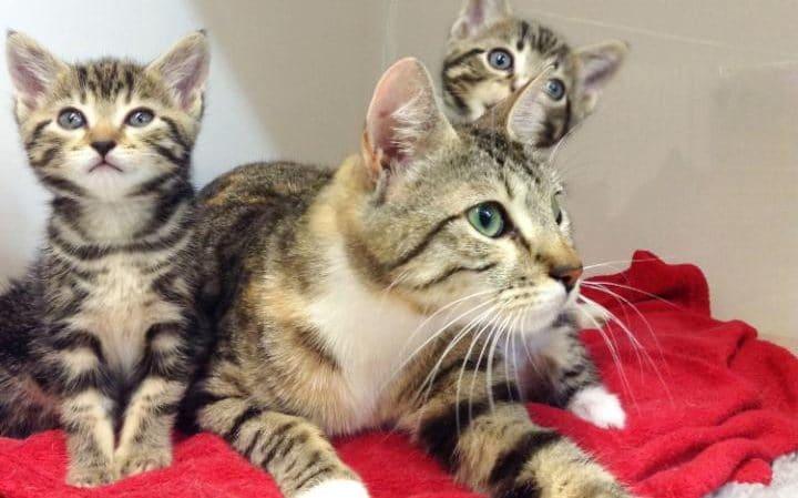Brite wäscht Kätzchen versehentlich in Waschmaschine und nennt sie dann Persil und Daz