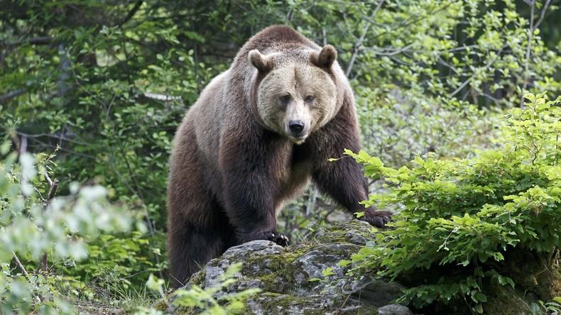 68-jähriger Japaner wehrt sich mit Karate gegen Bären