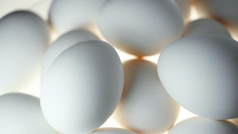 Millionen Eier in den Niederlanden verseucht