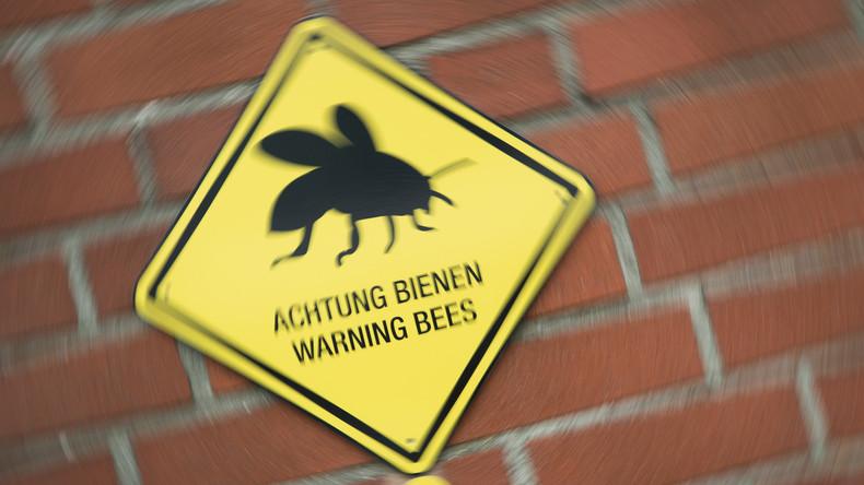 Bienen-Attacke auf Flugzeug in Indien [VIDEO]