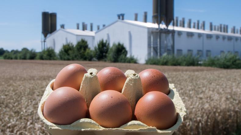 Läusebekämpfungsmittel Fipronil auch in deutschen Eier-Betrieben genutzt