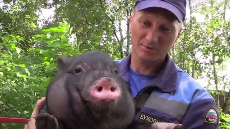 Schwein über Bord! Rettungskräfte bergen Ferkel aus Stausee in Moskau [FOTOS und VIDEOS]