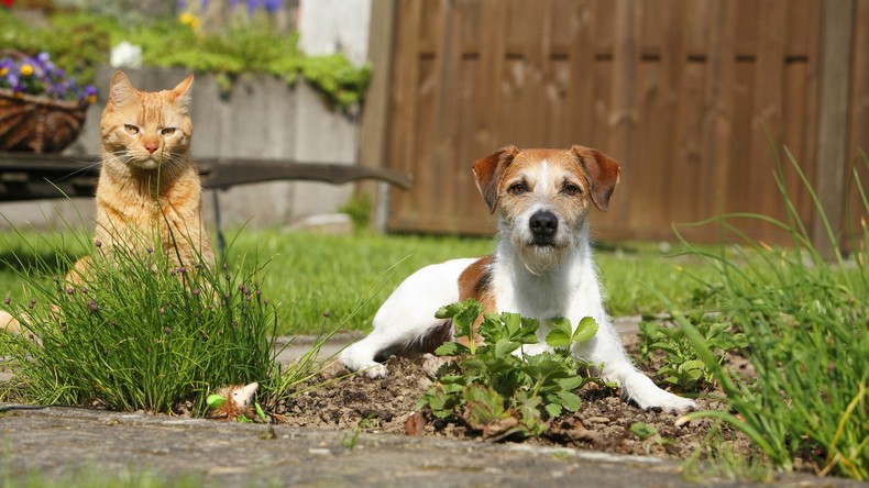 Von Hund und Katz verraten: Säumiger Schuldner wollte sich verstecken