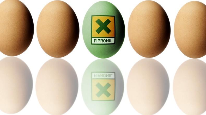 Fipronil-Skandal: Aldi nimmt Eier aus dem Verkauf – bei Rewe, Edeka und Lidl Regale weiter voll