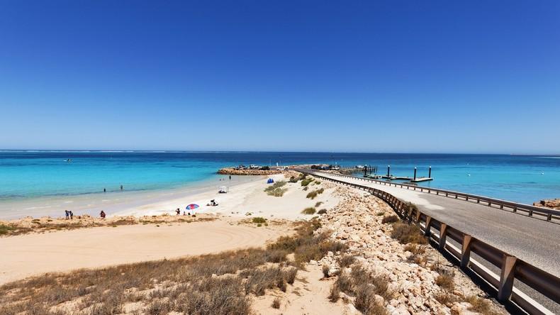 Rätselhafte Tierchen greifen Schüler an australischem Strand an