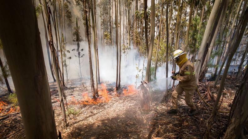 Italien: Freiwillige Feuerwehrleute setzten Wälder aus Eigennutz in Brand