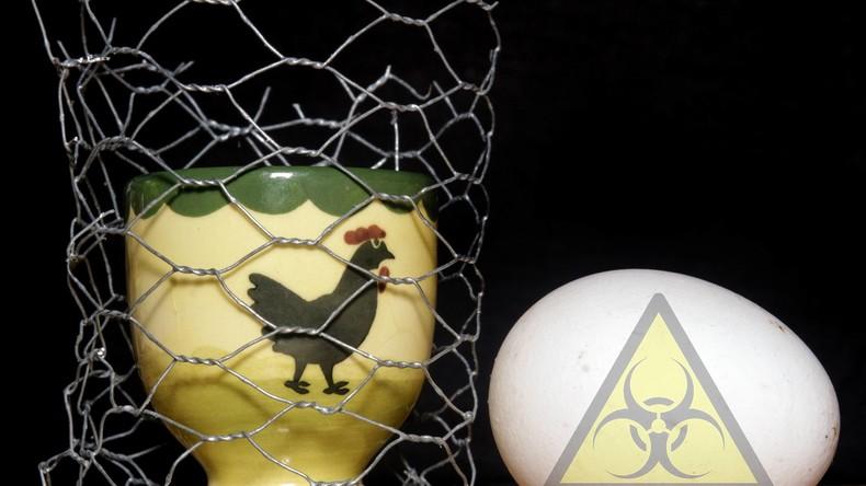 Skandal um Gift-Eier ruft Justiz auf den Plan: Oldenburger Staatsanwaltschaft ermittelt