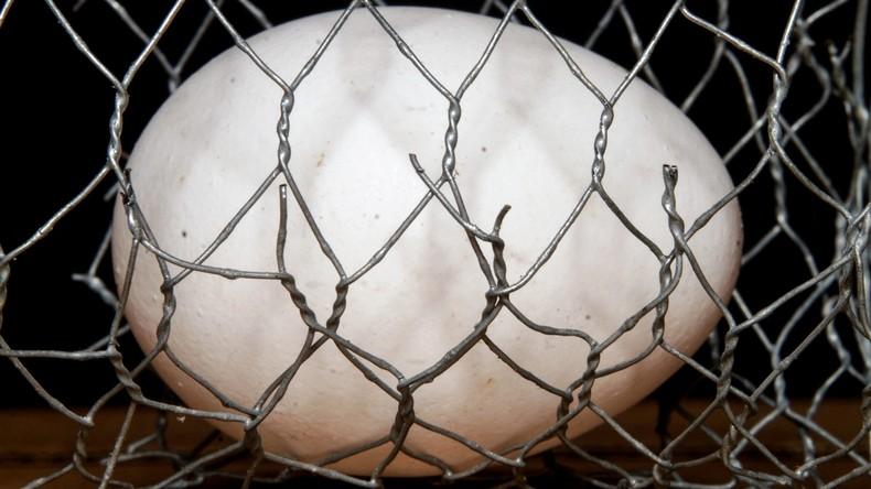 51 Geflügelbetriebe in Belgien wegen Fipronil-Verdachts gesperrt