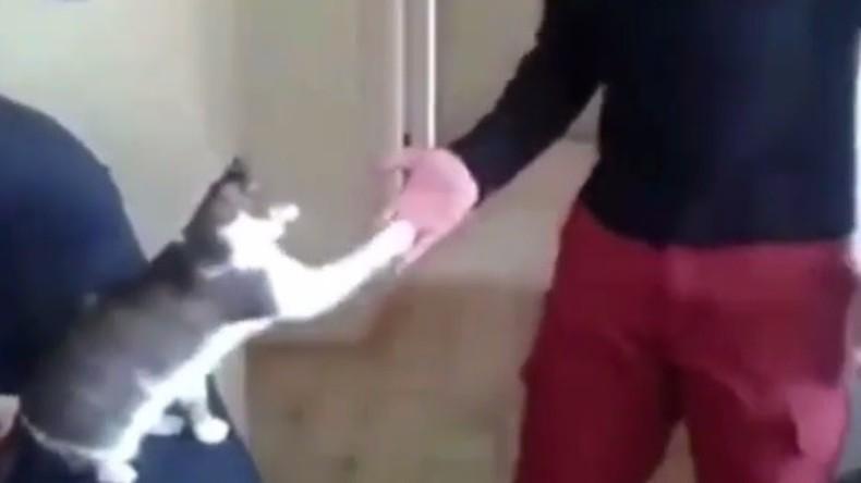 High Five, Bro: Kater begrüßt seinen Besitzer und erobert das Internet [VIDEO]