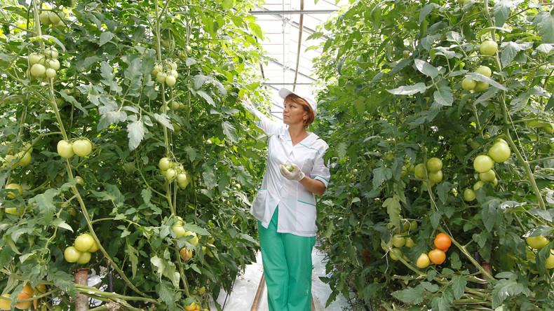 Drei Jahre Lebensmittel-Embargo: Vor- und Nachteile aus russischer Sicht