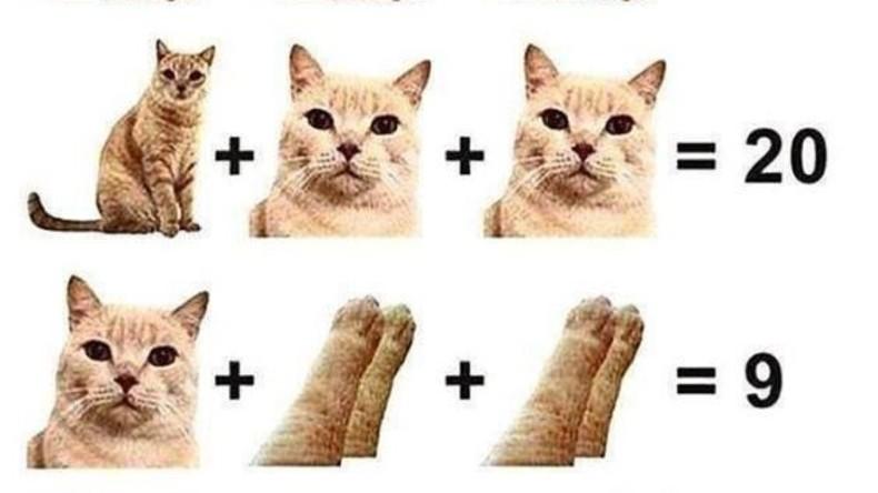 Katzen zählen: Teste deine Mathe-Kenntnisse