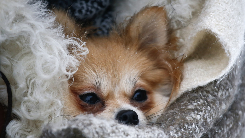 USA: Tierrechtsorganisation Peta schläfert aus Versehen Hund von Neunjähriger ein
