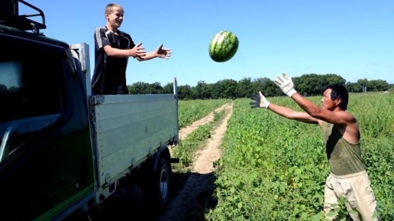Russland: Fang! - Wassermelonenernte im Gebiet Chabarowsk