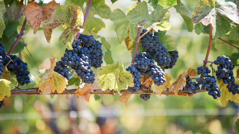 Mit den Jahren nur besser: 6.000 Jahre alter Wein auf Sizilien entdeckt