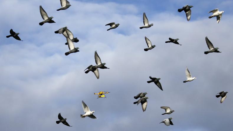 Von wegen weiße Taube: Drohne verletzt Luftraum über Vatikan