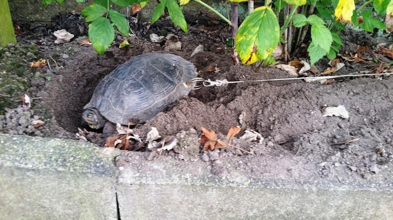 Deutscher leint Schildkröte an und fährt für drei Wochen in Urlaub