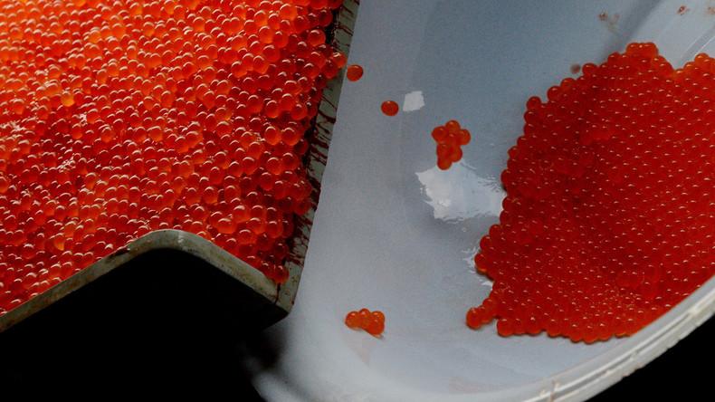 Russische Polizei entdeckt zwei Verstecke mit sechs Tonnen Kaviar