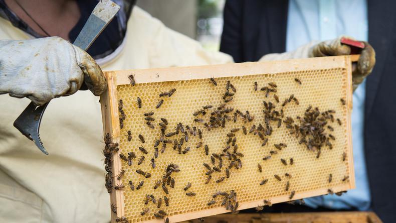 Schock für Imker: 3,8 Millionen Bienen samt Honig in Luxemburg gestohlen