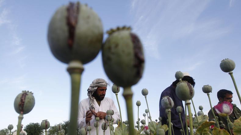 Afghanisches Ministerium warnt: Neue US-Strategie ignoriert Anti-Drogen-Kampagne