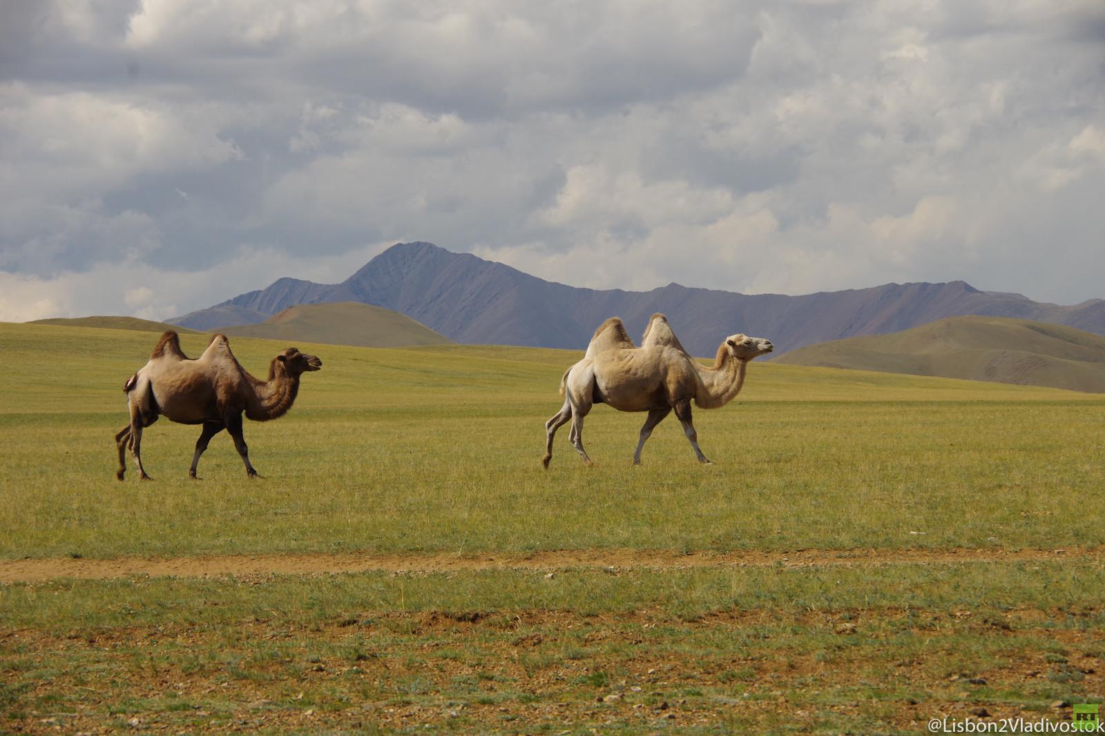 von lissabon nach wladiwostok die mongolei