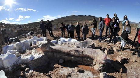 Reste des größten Dinosauriers aller Zeiten in Argentinien gefunden