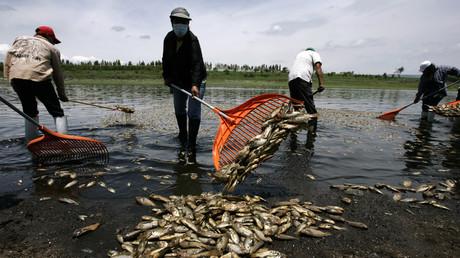 Dorfbewohner sammeln tote Fische nachdem ein Leck in einer Fleischfabrik das Wasser verseuchte, Acatlan de Juarez, Mexiko, 1. Juli 2013.
