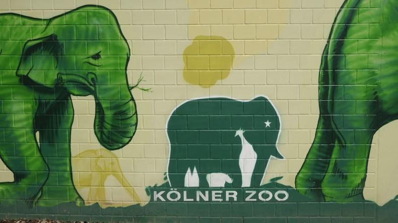 Unverhoffter Geldsegen aus den USA: Amerikanerin will Kölner Zoo 22 Millionen Dollar hinterlassen
